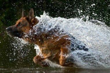 photo by likedogzoolife