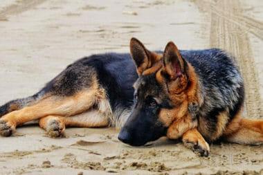 photo by dogsmastermind