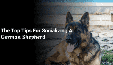 Socializing a German Shepherd